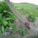 Blume_800X600.jpg