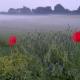 Blume_nebel_800x450.jpg