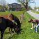 Pferde-fuettern_640x480.jpg